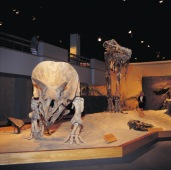 Dinosaur Display, Royal Tyrrell Museum of Palaeontology, Drumheller - Photo Credit: Travel Alberta